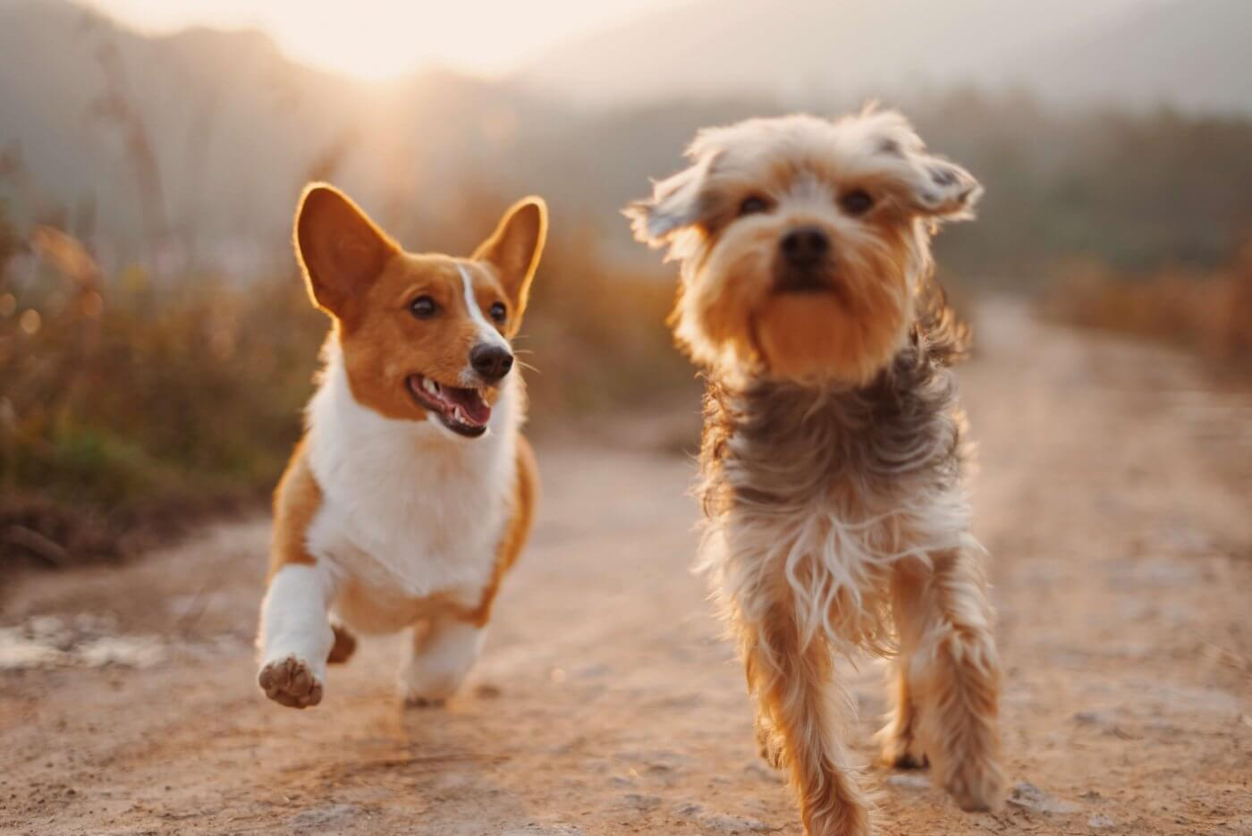 Dogs Running   The Mustcard