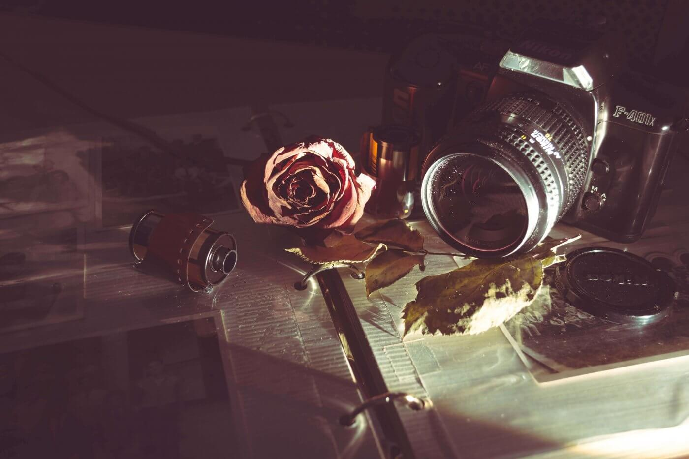 Camera & Rose | The Mustcard