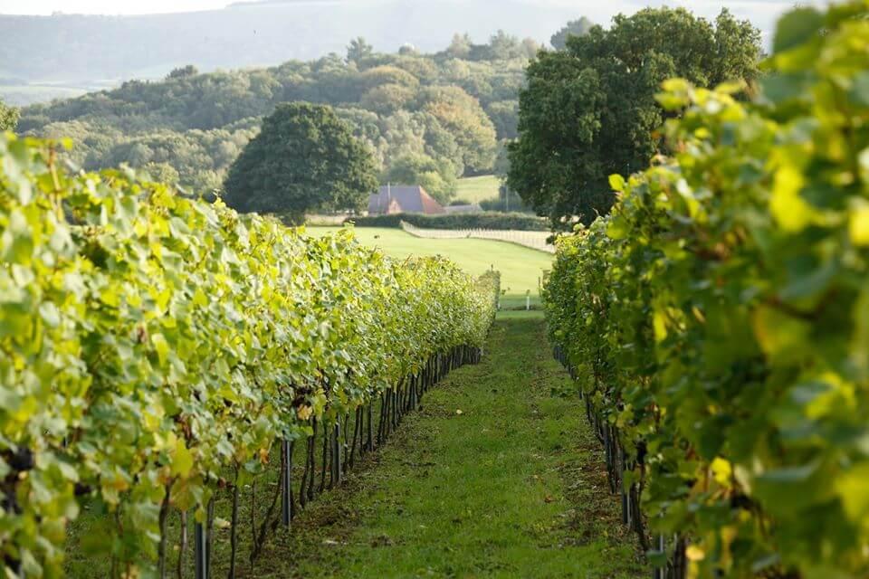 Vineyard | The Mustcard